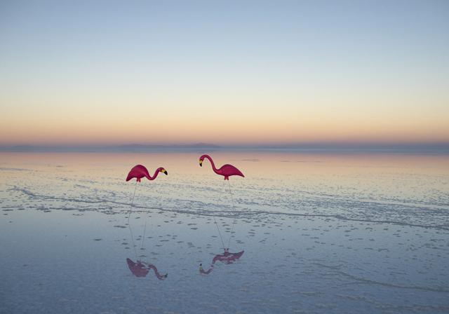 flamingos_gray malin