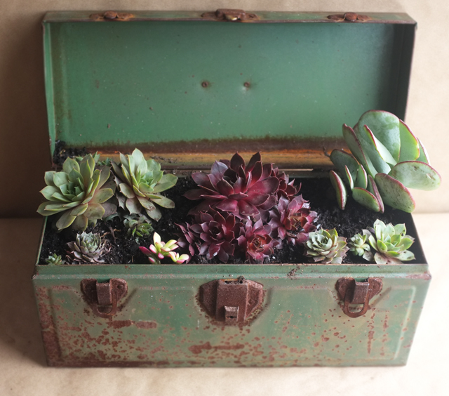 succulenttoolbox2_web