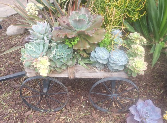san diego succulent wagon