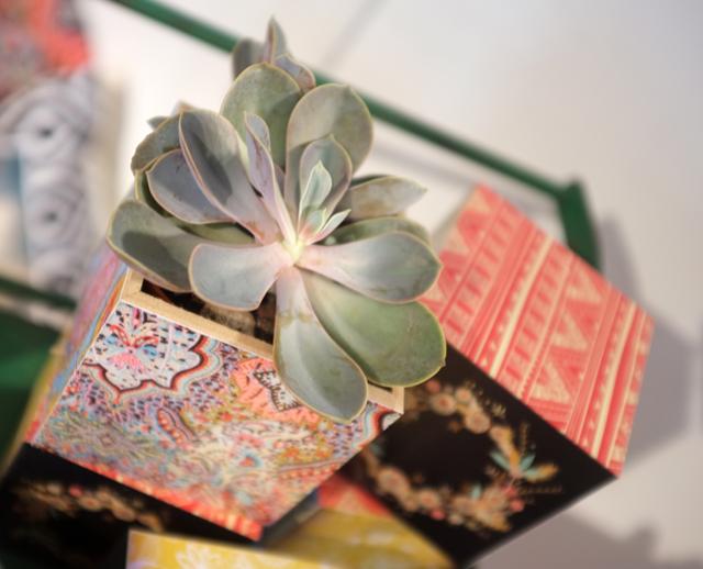Shutterfly succulent box