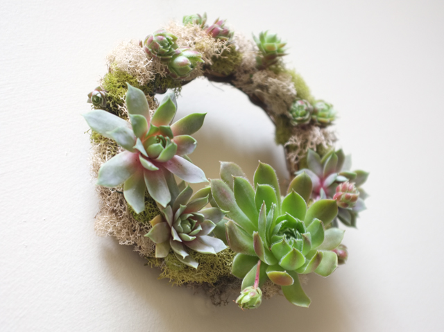 Small Succulent Wreath