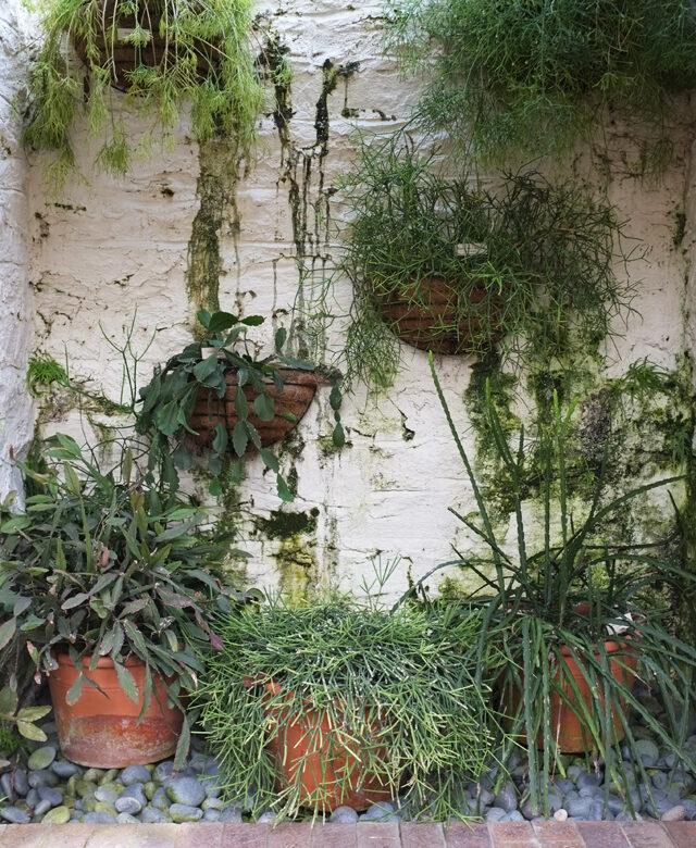 New York Botanical Garden Alana Jones Mann