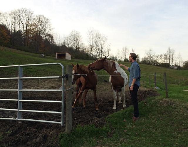 Vermont Farm Horses