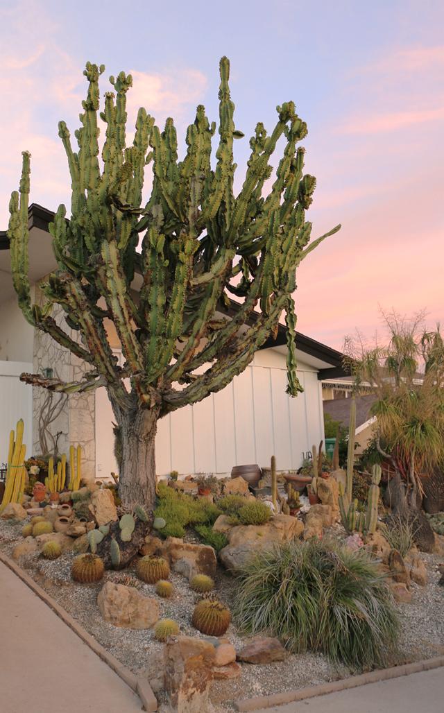 Cactus Yard