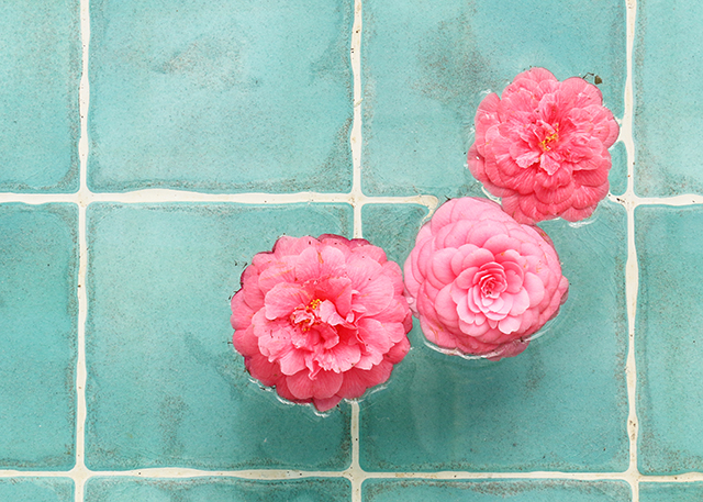 Camellias in Pool