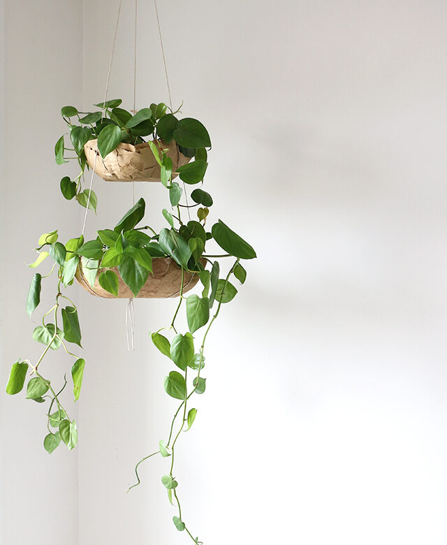 diy projects home succulents - Diy Hanging Planter