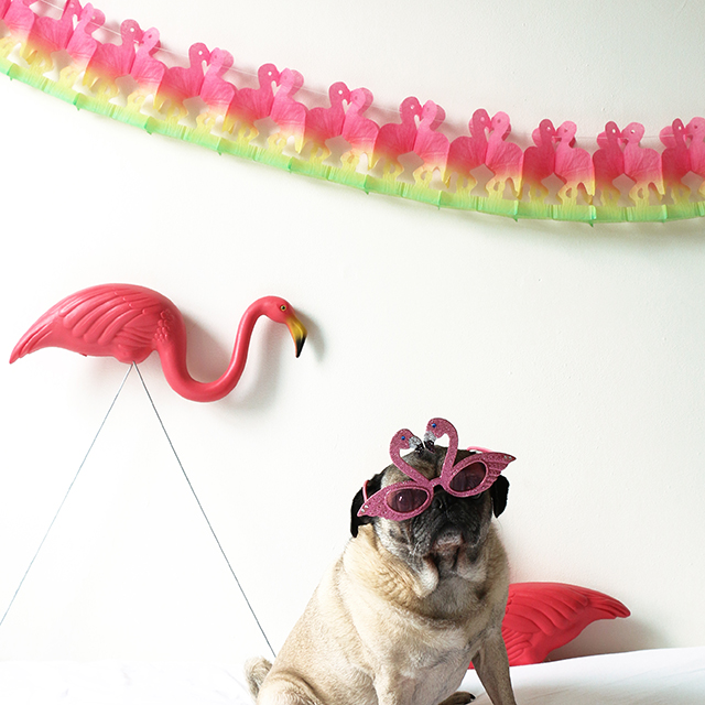 Riley with Flamingo