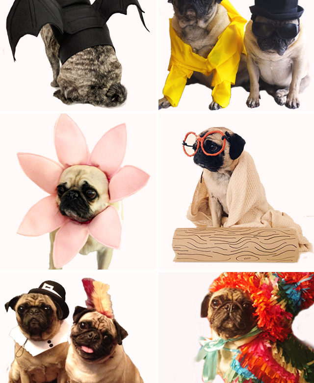 Easy costumes for your dog alana jones mann diy projects halloween holidays pugs solutioingenieria Image collections