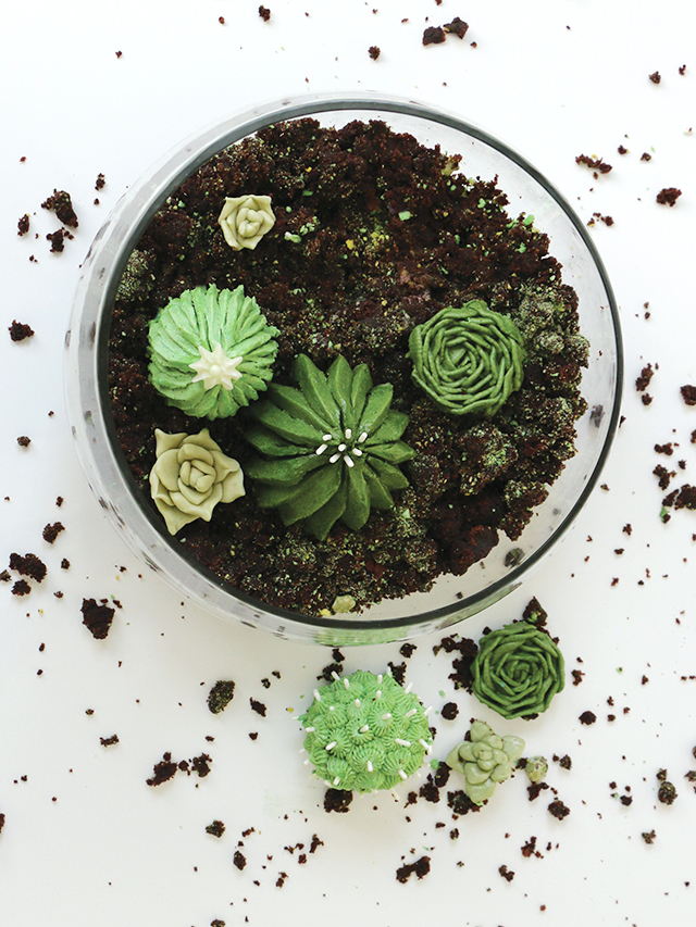 Diy house plant cupcakes