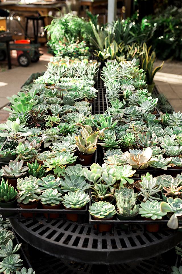 cactusparty8