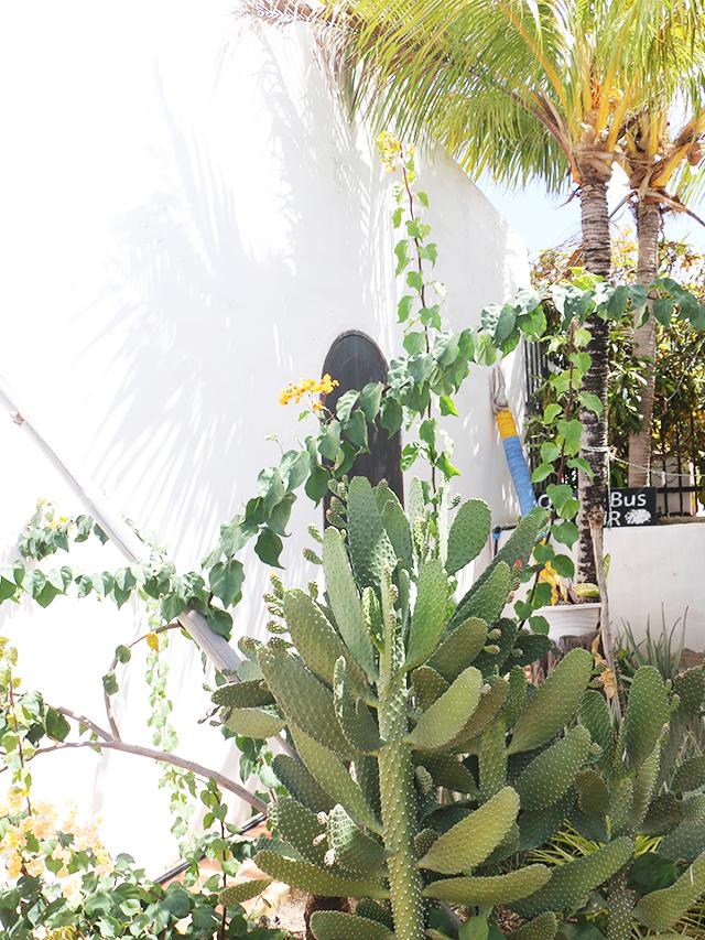 flat-cactus-640