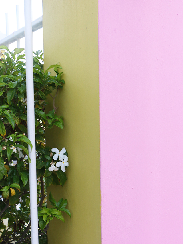 Pink Yellow Wall